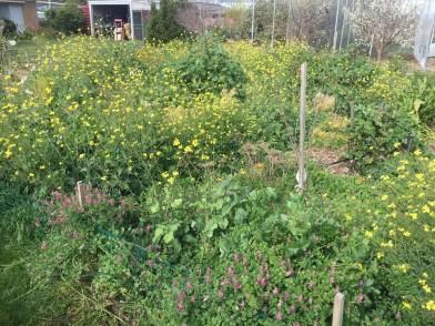 Grind - forest vegetables1