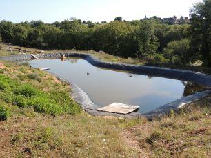 LF - duck pond