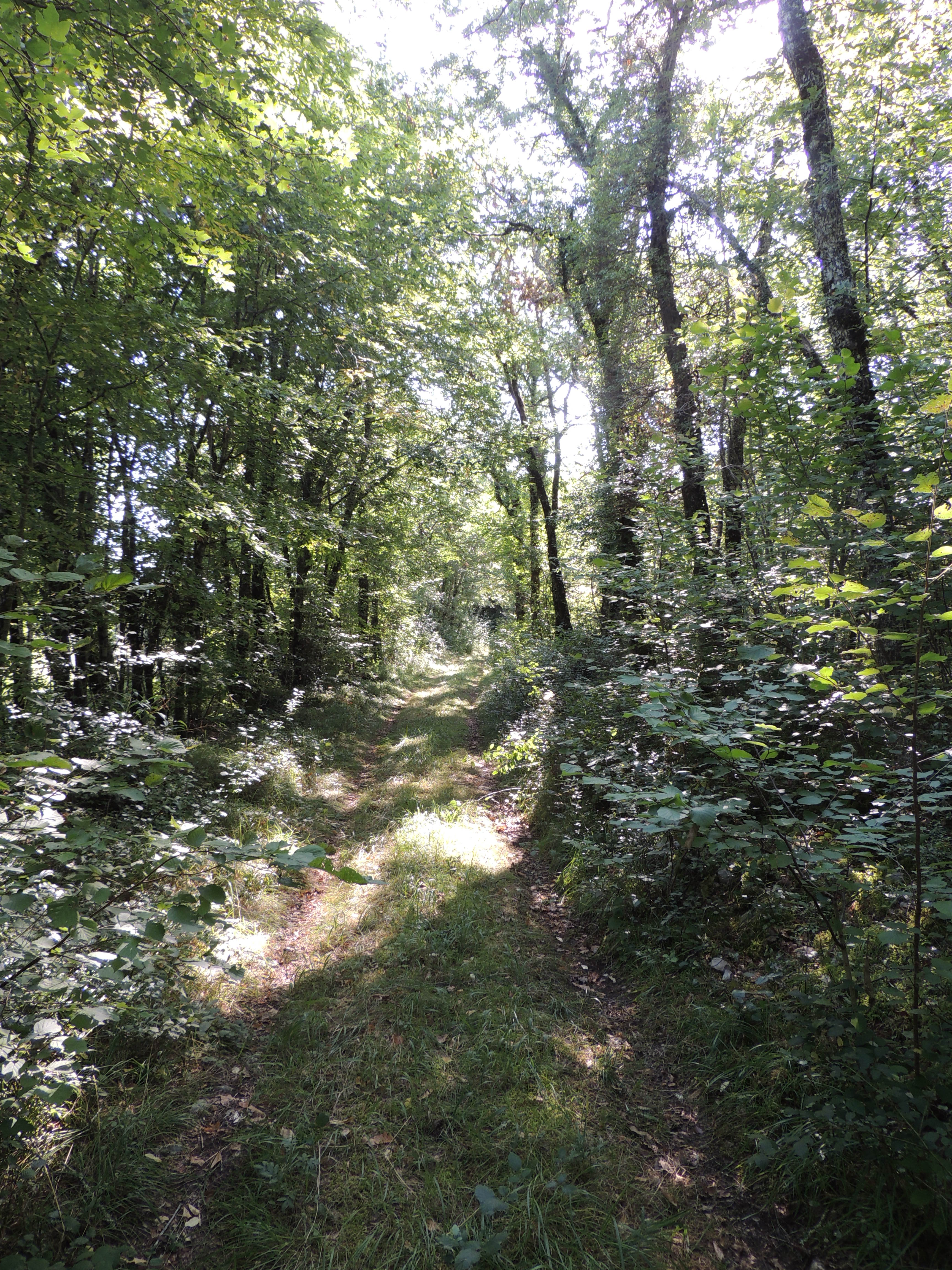 LF – forest path