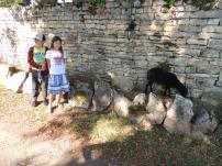 LF - kids and sheep