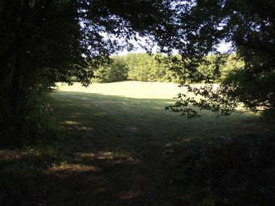 LF - meadows