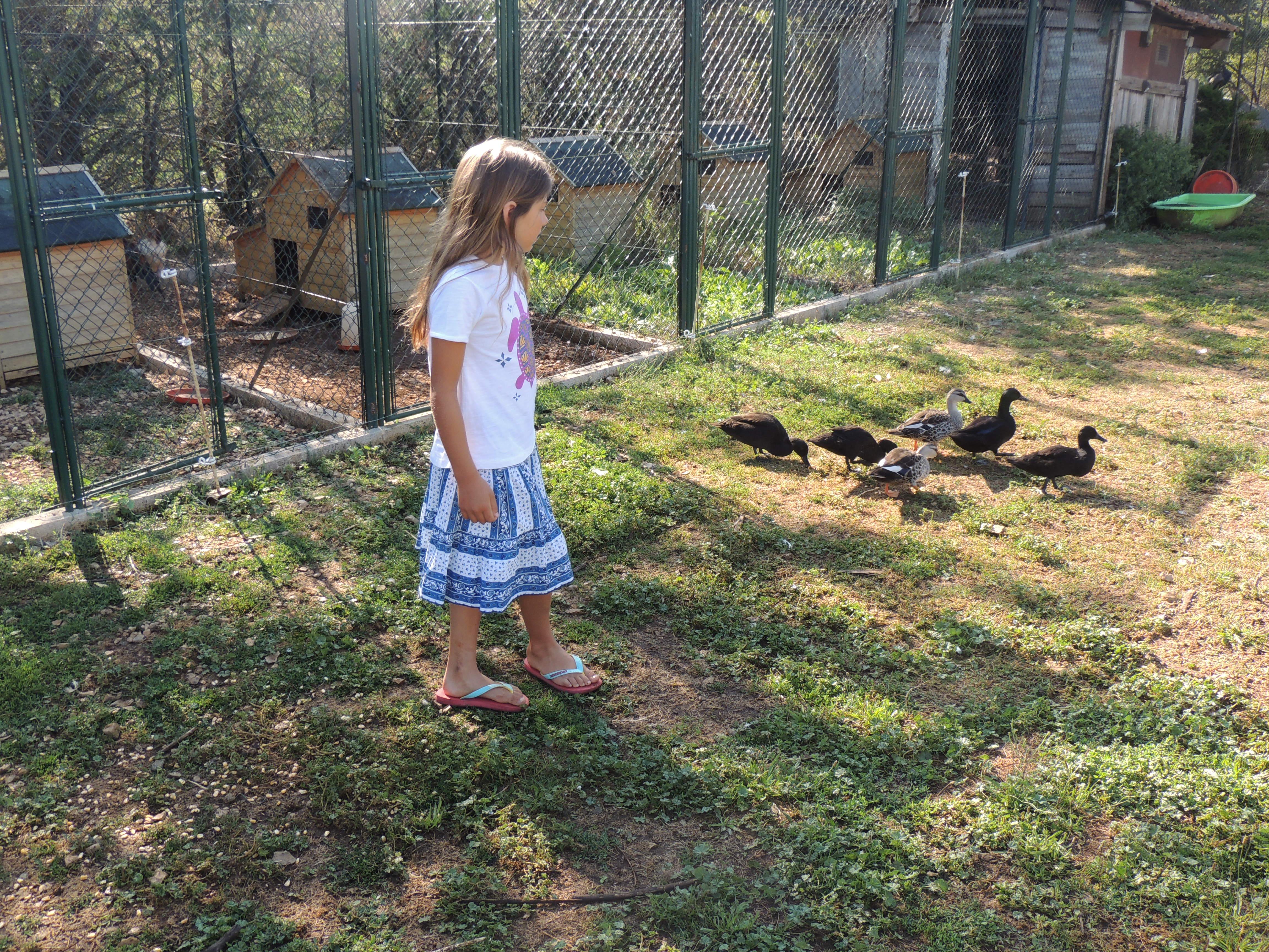 LF – Micaela and ducks 2