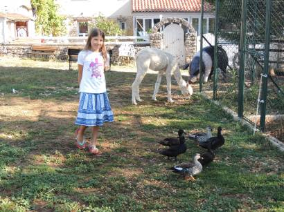 LF - Micaela ducks and lama