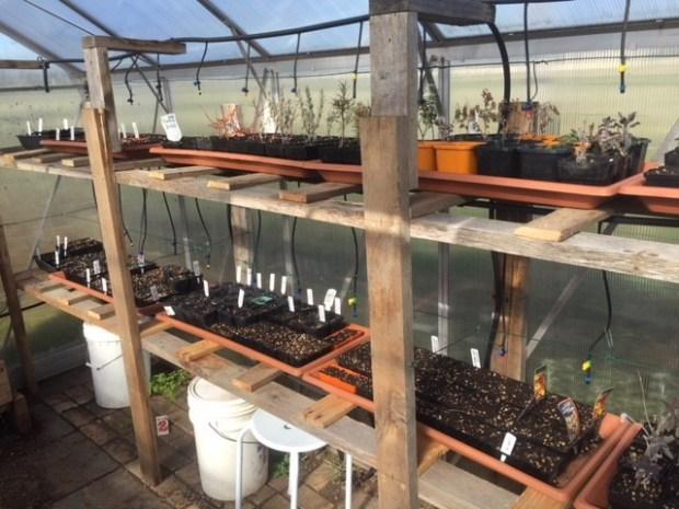 Spring - greenhouse