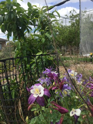 Dland peach guils flowers