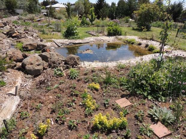 DLand pond and guild