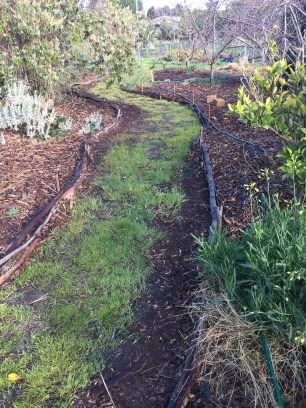 SFix - wider path 2