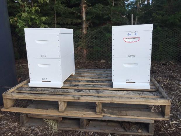 Bees - hives