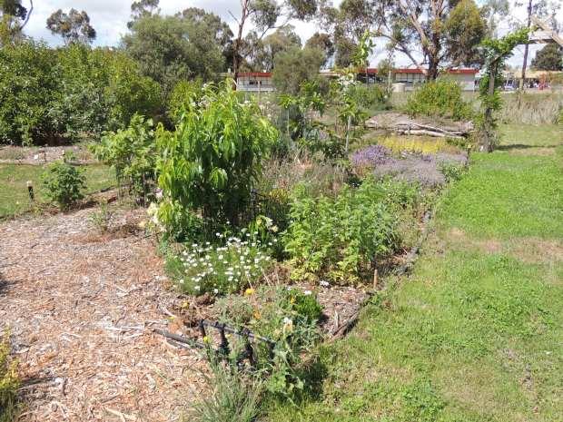 FG - peach and herbs