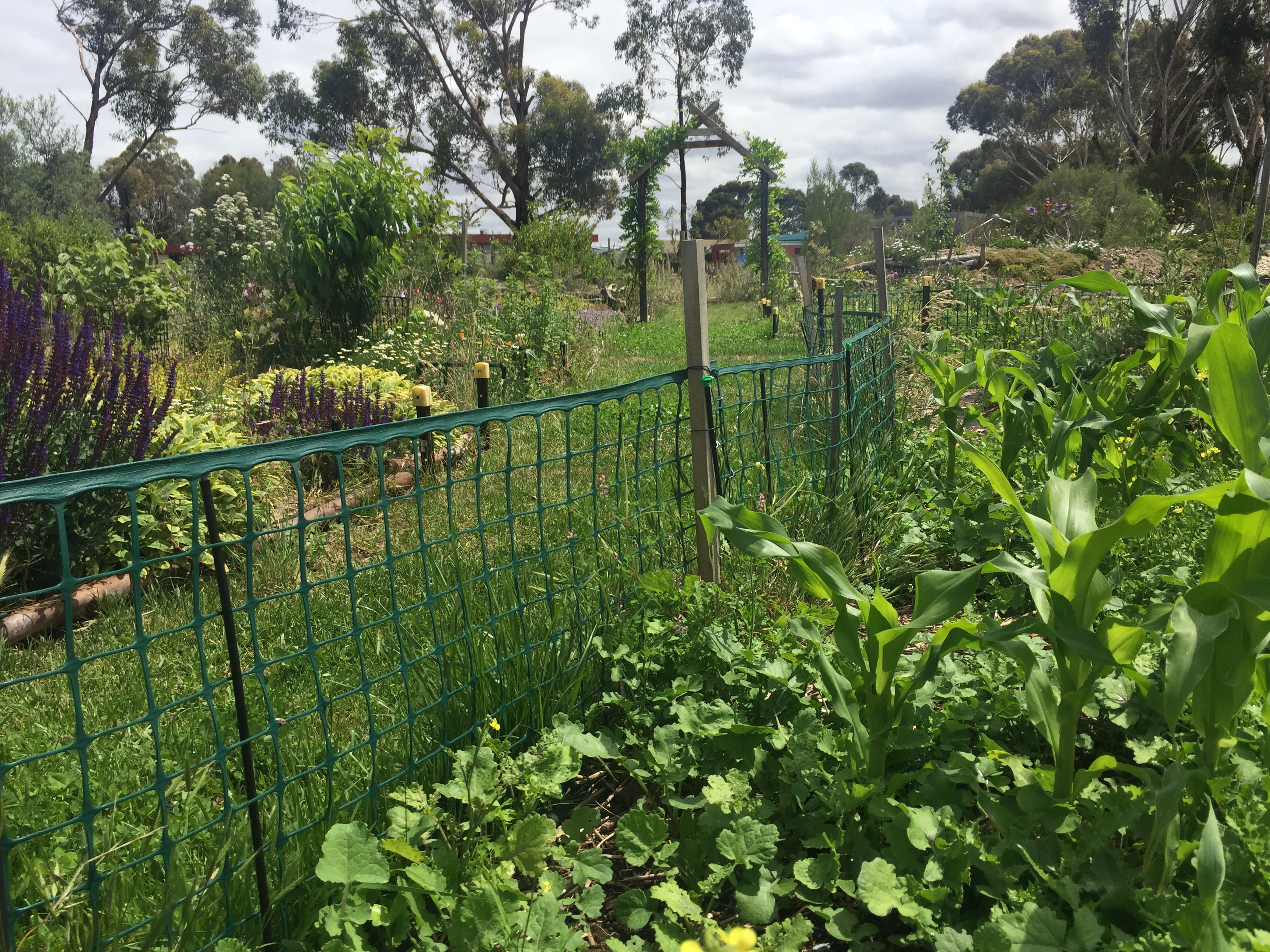 FG – potager and path