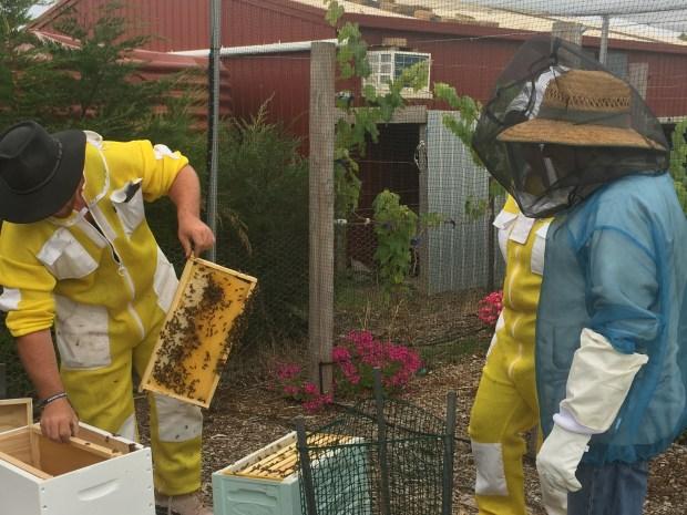 Hive - Sam transferring frames