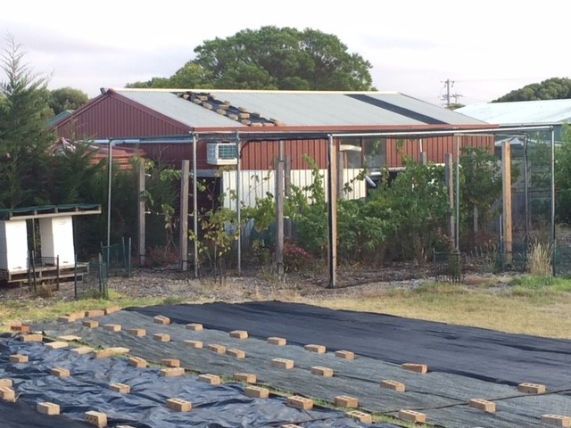 Grapes – new vineyard with shed
