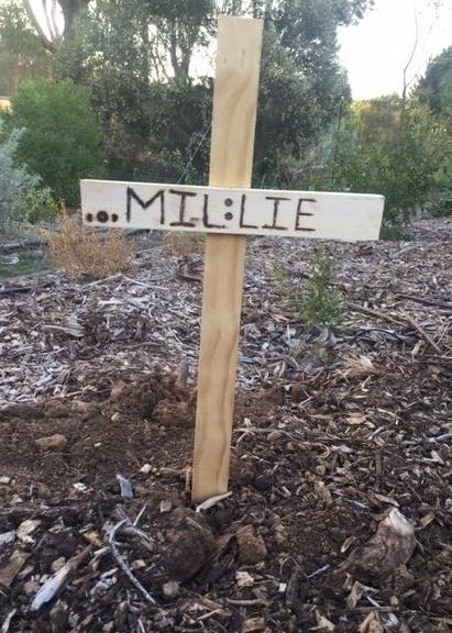 Millie-funeral-1989769056-1551393866919.jpg