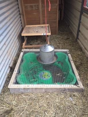 Coop hygiene - duck lid closed