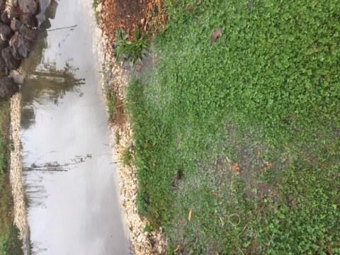 Rain – pond overflow