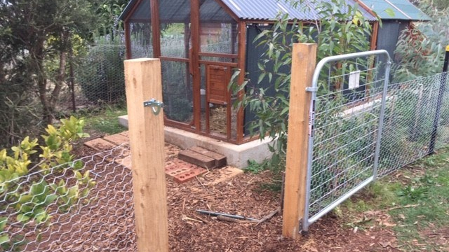Chookproof- rooster fence feature