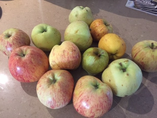 NB1 - Apples