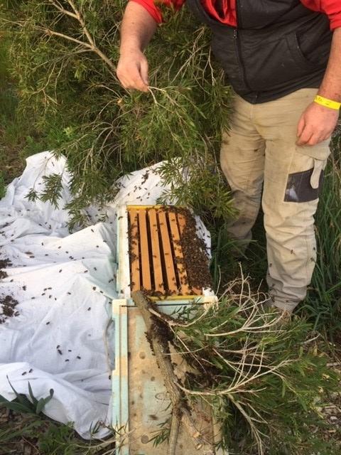 Bee - Sam saving swarm 3