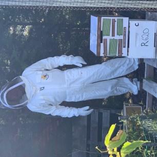 Bees - box transfer 1