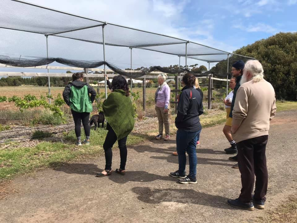 PPP – walkabout grapes