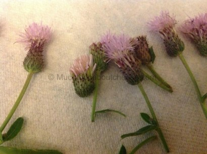 """The """"Thistle"""" heads"""