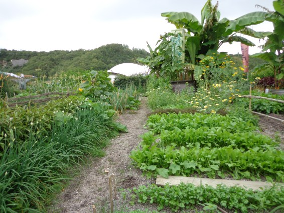 One of the Allotments of the World at the Eden Project.