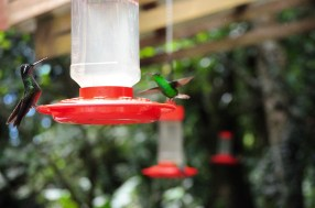"""Hanging from the trees and buildings in the exhibit are 10 feeders to attract hummingbirds into this area. """"These hummingbirds are wild. They come and go many times throughout the day,"""" said Mendez. Photo by McGuire McManus"""