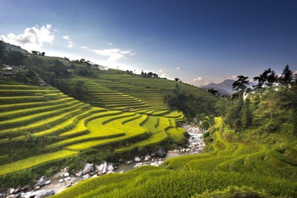 Ganbar padi, sawah, hijau, alam indah, traveling, batu, sungai bersih, sungai jernih, wisata desa, wisata indanh, wisata unik