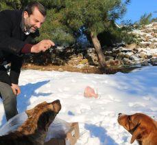 Bursa Gürsu'da sokak hayvanları düzenli yemleniyor
