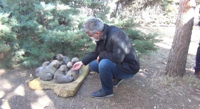 Erzincan'da sokak hayvanları yemleniyor