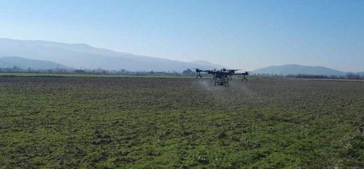 Aydın Koçarlı'da drone ile ilaçlama dönemi