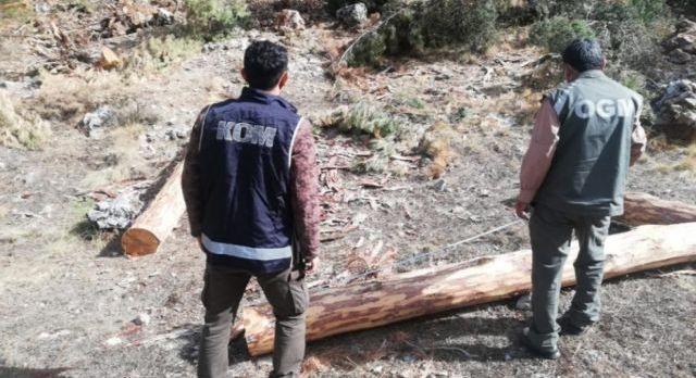 Fethiye Orman'da ikinci dalga: 4 gözaltı!