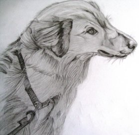 First Animal Sketch