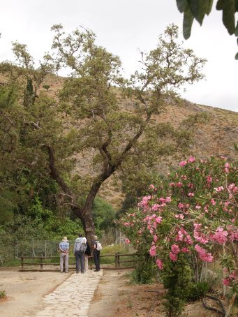 Gortyn Plane tree of Zeus & Europa Gillian Hovell Muddy Archaeologist