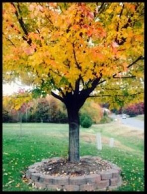 Autumn Colors muddybootsanddiamonds.com