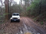 Jeep on the trail