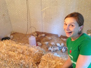 Our short-lived meat chicken experiment at a friend's farm. They all died.