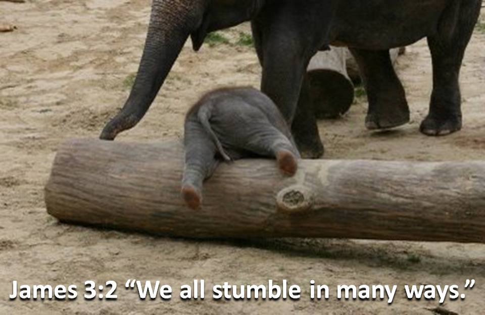 We All Stumble in Many Ways