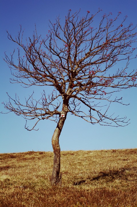 dyingtree