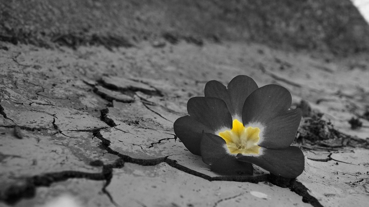 Navigating the Wilderness: Transformation Through Brokenness