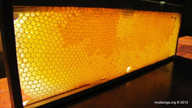 The year's first frame of honey (July 01, 2012.)