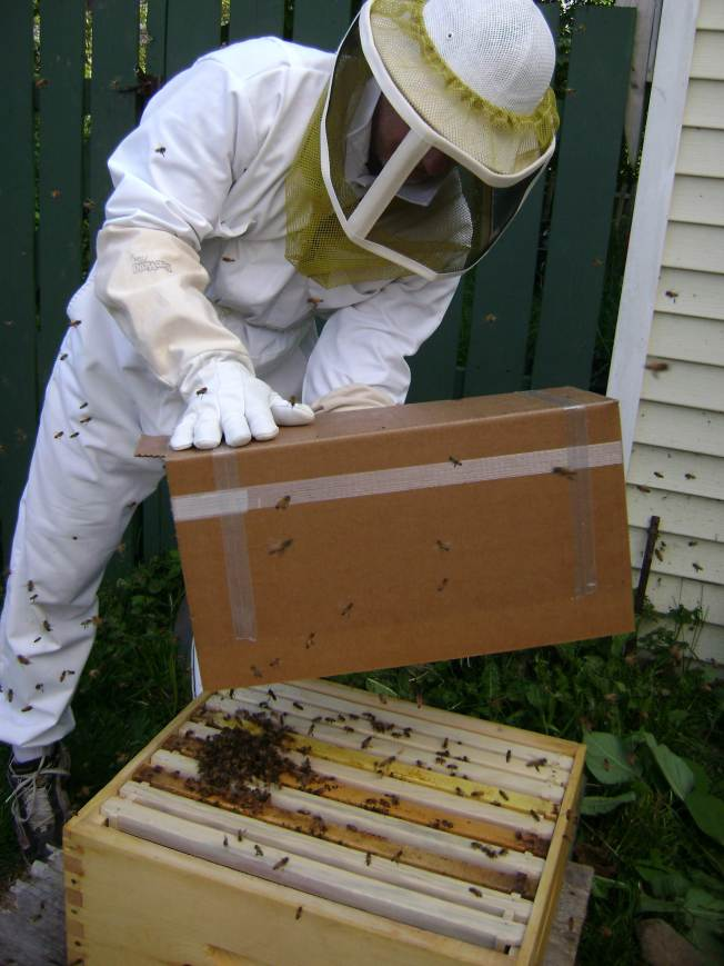 Installing Nuc Boxes  Full Of Honey Bees