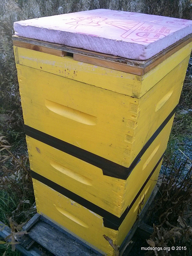 3-deep hive, solid rim (or spacer or eke), an inner cover in the winter position, and a piece of hard insulation on top.  (The top cover is missing from the photo.)