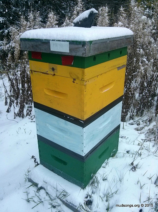 The typical winter configuration for a world renowned and stupendous Mud Songs bee hive. (Nov. 04, 2015.)