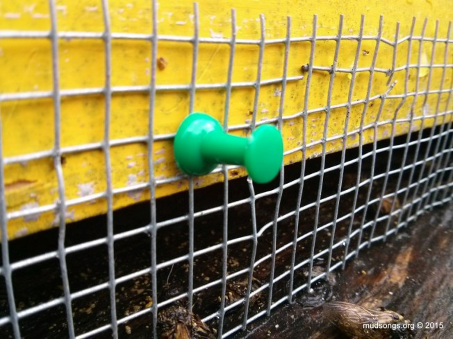 One of three pushpins used to attach shrew-proofing mesh to hive. (Dec. 13, 2015.)