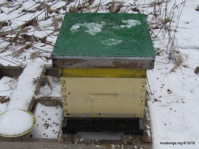 The loneliest hive in Newfoundland. (March 13, 2016.)