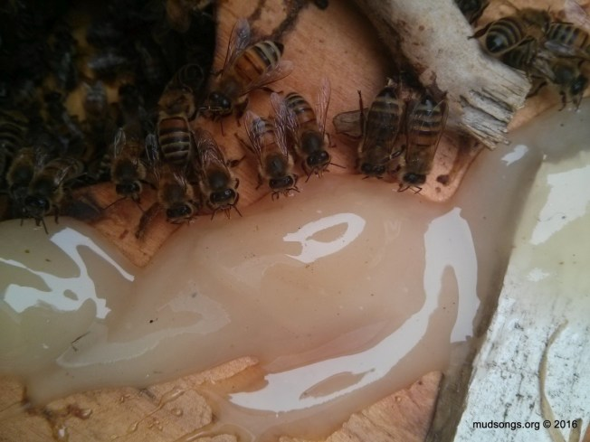 2016-06-05 11.11.22 honey trough