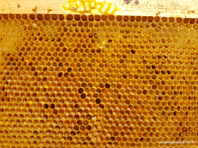 "Medium frame in ""honey super"" full of pollen. (July 09, 2016.)"