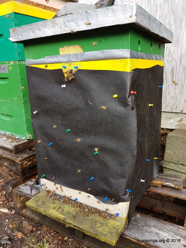 Quarter-inch mesh covering all the entrances. The mesh slows them down, but doesn't prevent them from getting out or inside the hive. (Nov. 17, 2016.)