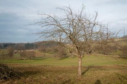 baumschnittkurs_nordschwaben_20140201-DSC_3550